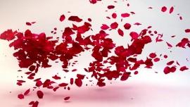 Embedded thumbnail for «Листая периодику: Для милых дам» видеообзор периодических изданий